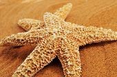 closeup of some starfishes on the sand of a beach