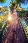 pic of redwood forest  - Epic Sequoia Place in the Middle of Sequoia National Park Forest - JPG