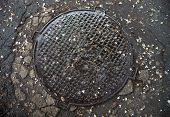 picture of manhole  - Manhole with metal cover in the cracked asphalt surface wet after the rain and with fallen acacia flowers on it - JPG