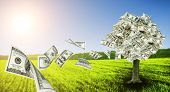 foto of prosperity sign  - Money tree growing in the middle of green meadow  - JPG