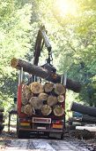 image of logging truck  - Truck loading wooden trunks on trailer in forest - JPG