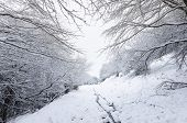 stock photo of snowy-road  - snowy road in the forest - JPG