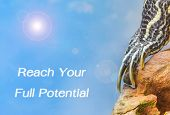 stock photo of craw  - metaphor of Reach Your Full Potential with leg of turtle - JPG