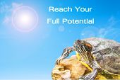 pic of craw  - metaphor of effort and long way to success with turtle and sun background - JPG