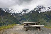 picture of edelweiss  - Grossglockner High Alpine Road - JPG