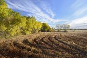 stock photo of apache  - Newly mowed fields surrounded by cottonwood trees in autumn  - JPG
