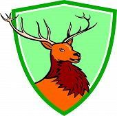 stock photo of deer head  - Illustration of a red stag deer buck head facing side set inside shield crest on isolated background done in cartoon style - JPG