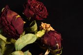 stock photo of condolence  - Dry roses and Flowers in Black Background with leaf - JPG