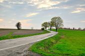 stock photo of tree lined street  - Winding route leads through the fields and trees in Poland - JPG