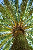 picture of palm  - Tropical tree - JPG