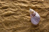 stock photo of shells  - Sea shell on a coarse - JPG