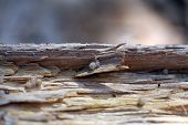 stock photo of baby spider  - Close up view of spider hatchlings freshly emerged fro the egg sack on the underside of a log - JPG