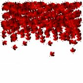 Illustration Of The Red Falling Maple Leaves. Template For A Framework And Vignettes. poster