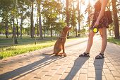 Girl And Dog Play On The Alley In The Park On The Background Of The Sun. Dog Jumps At The Girl While poster