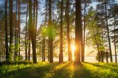 Amazing Landscape Of Sunny Summer Forest At Sunset. Sun Rays Through Trunks Of Trees. Grass Glowin O poster