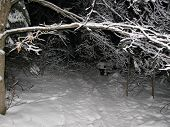 foto of ski-doo  - snow covered treed hiking or snowmobile path