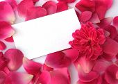 stock photo of valentines day card  - petals and a flower with a blank card for your text - JPG