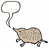 pygmy shrew illustration