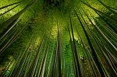 Bamboo Grove, Bamboo Forest In Arashiyama, Kyoto, Japan poster