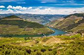 View Of Vineyards In Douro Valley From Double Viewpoint De Loivos - Vila Real District, Portugal, Eu poster