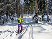 Young Man Ski Touring On Splitboard And Climbing To Forest At Sunny Winter Day poster