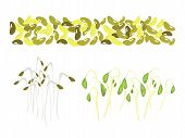 Set Of Mung Beans And Sprouts On White Background