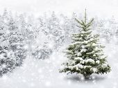 stock photo of cold-weather  - Outdoor shot of a nice little fir tree in thick snow for the perfect Christmas mood - JPG