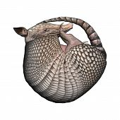 image of armadillo  - 3D digital render of a Armadillos a New World placental mammal with a leathery armor shell isolated on white background - JPG
