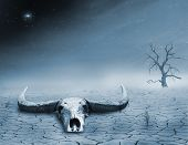 image of oxen  - view of of and ox skull and a dead tree in the desert at sunset - JPG