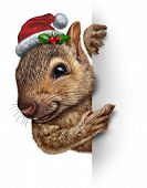 image of holly  - Holiday squirrel vertical sign wearing a santa clause hat with holly and red berries hanging over a blank side banner with copy space gripping a billboard - JPG