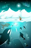 stock photo of orca  - Arctic underwater marine life with whale - JPG
