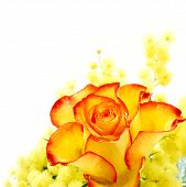 stock photo of yellow rose  - Red and yellow rose arrangement photographed on white background - JPG
