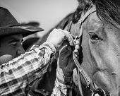 image of bridle  - Cowboy adjusting the bridle on his horse.