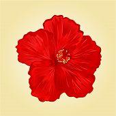 picture of hibiscus  - Red  hibiscus simple tropics flower vector illustration - JPG