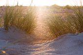 stock photo of dune grass  - Sunset and dune grass in the foreground - JPG