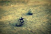 picture of pine-needle  - Pine needles and cones on the ground shallow dof - JPG