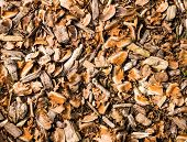 foto of wood pieces  - Natural mulch below a conifer tree - JPG