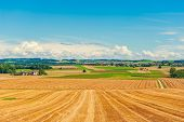 foto of fall-wheat  - Harvested wheat field in the end of summer - JPG