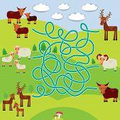 stock photo of baby sheep  - Farm animals  - JPG