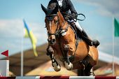 picture of horse-riders  - rider on a sports horse jumping over an obstacle during the horsejumping event - JPG