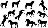 stock photo of horse-breeding  - Vector set of horse silhouette in different positions - JPG