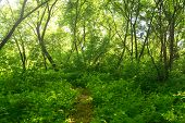foto of backwoods  - Small Pathway going trough the forest outdoors - JPG