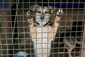 pic of stray dog  - Shelter for homeless dogs waiting for a new owner - JPG