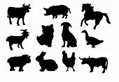 image of horses ass  - Silhouettes of the most common farm animals - JPG