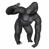 picture of gorilla  - Angry gorilla isolated in white background  - JPG