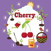 pic of cherry  - Vector illustration of a garden in the style of the flat - JPG