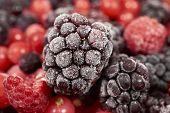 picture of frozen  - Macro shot of a frozen blackberry on other frozen berry fruits - JPG