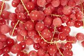 foto of ice crystal  - Background from many frozen currants with stems covered with ice crystals - JPG