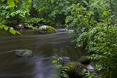 foto of redwood forest  - forest river Lindulovo in the Leningrad region, Russia ** Note: Soft Focus at 100%, best at smaller sizes - JPG