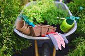 image of wheelbarrow  - All necessary gardening equipment in wheelbarrow - JPG